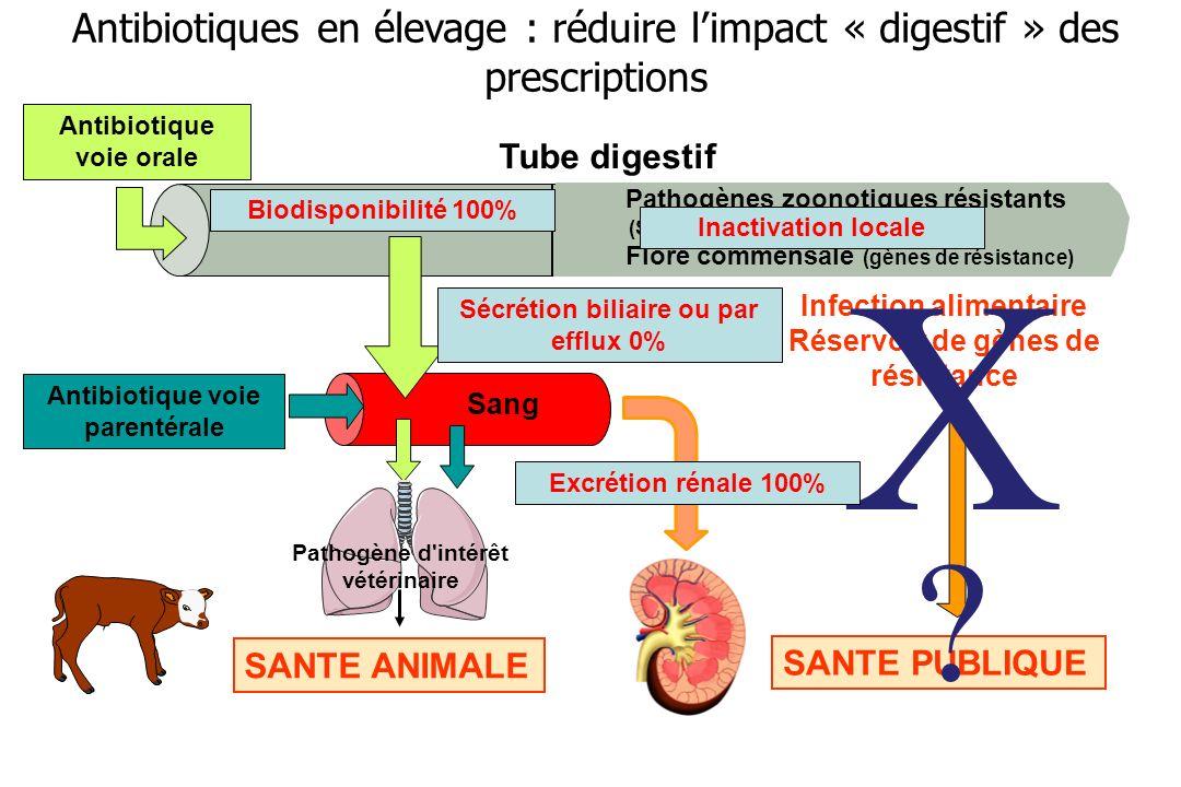 Tube digestif Sang Antibiotique voie orale SANTE ANIMALE Pathogène d'intérêt vétérinaire Antibiotique voie parentérale Pathogènes zoonotiques résistan