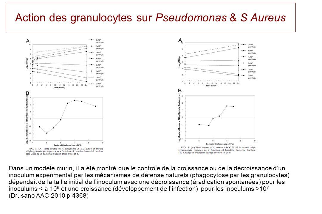 Action des granulocytes sur Pseudomonas & S Aureus Dans un modèle murin, il a été montré que le contrôle de la croissance ou de la décroissance dun in