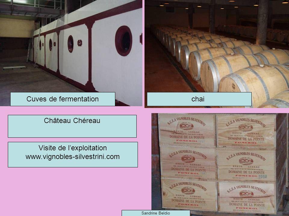 Cuves de fermentationchai Visite de lexploitation www.vignobles-silvestrini.com Château Chéreau Sandrine Beldio