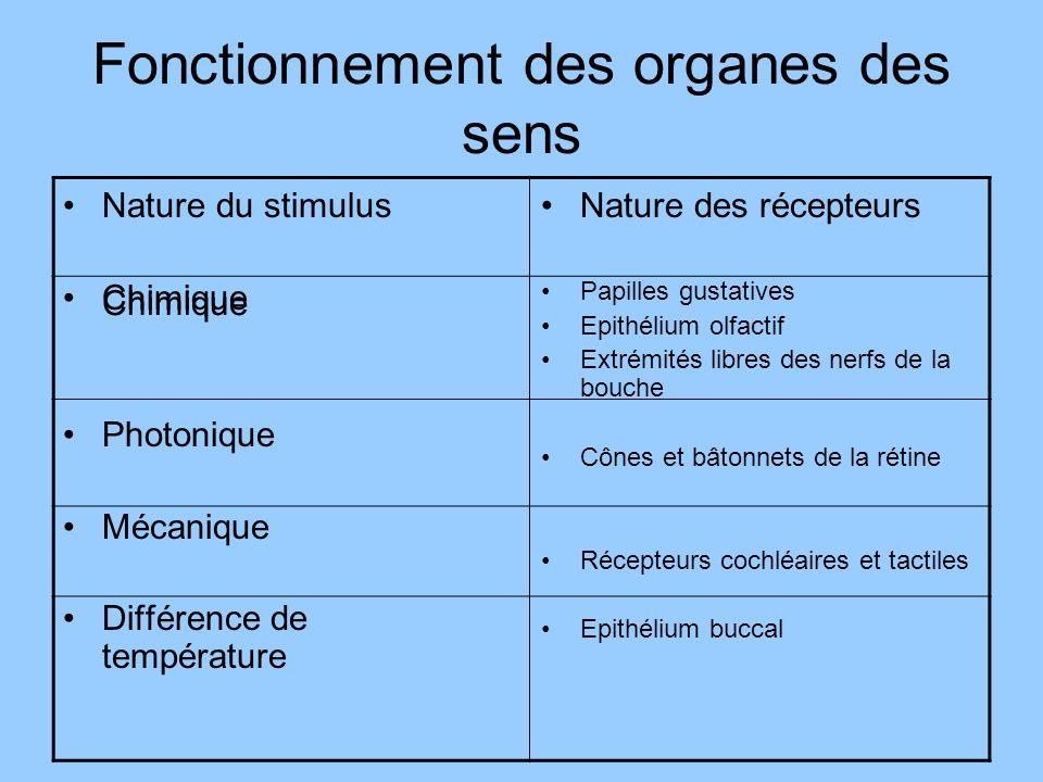 Fonctionnement des organes des sens Nature du stimulus Chimique Photonique Mécanique Différence de température Nature des récepteurs Papilles gustativ