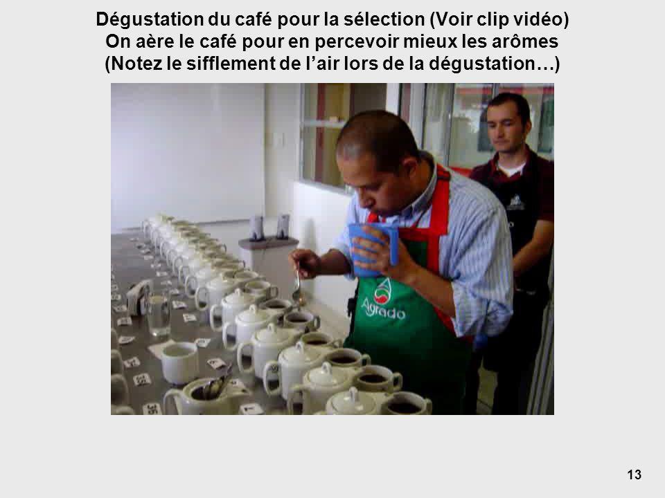 Dégustation du café pour la sélection (Voir clip vidéo) On aère le café pour en percevoir mieux les arômes (Notez le sifflement de lair lors de la dégustation…) 13