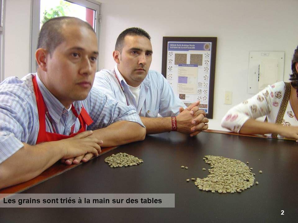 2 Les grains sont triés à la main sur des tables