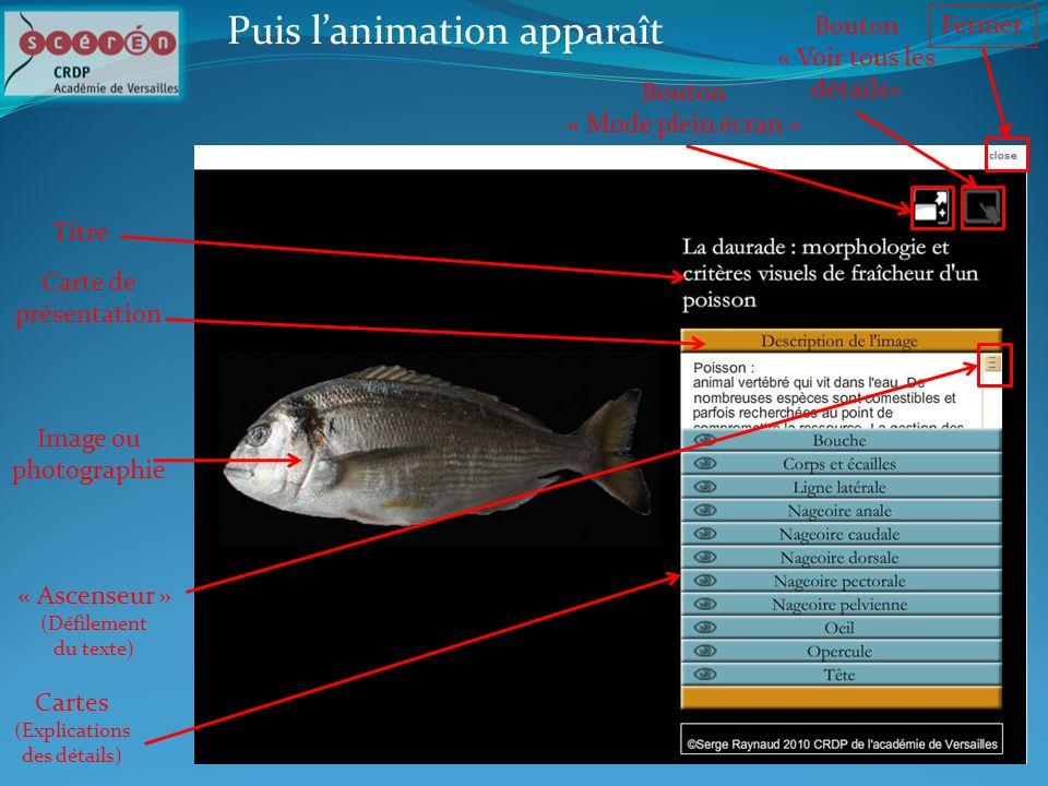 Puis lanimation apparaît Titre Image ou photographie Bouton « Voir tous les détails» Bouton « Mode plein écran » Cartes (Explications des détails) Car