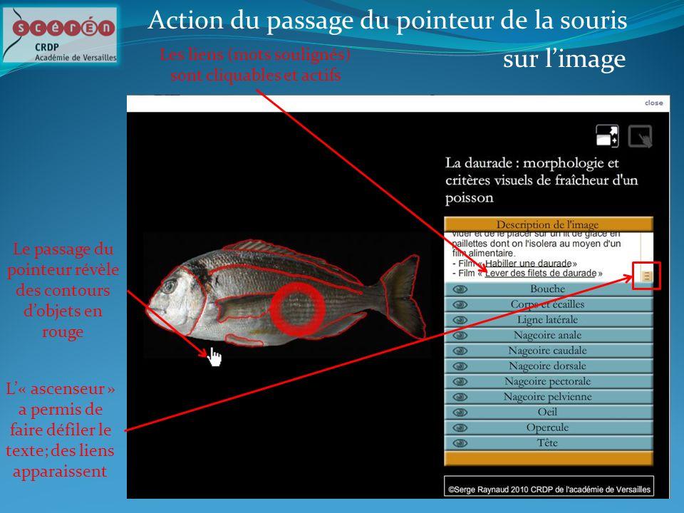 Action du passage du pointeur de la souris sur limage Les liens (mots soulignés) sont cliquables et actifs L« ascenseur » a permis de faire défiler le