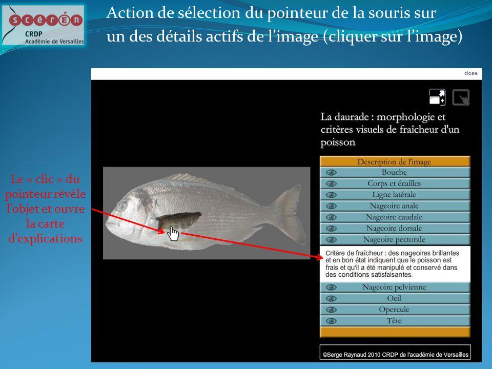 Le « clic » du pointeur révèle lobjet et ouvre la carte dexplications Action de sélection du pointeur de la souris sur un des détails actifs de limage