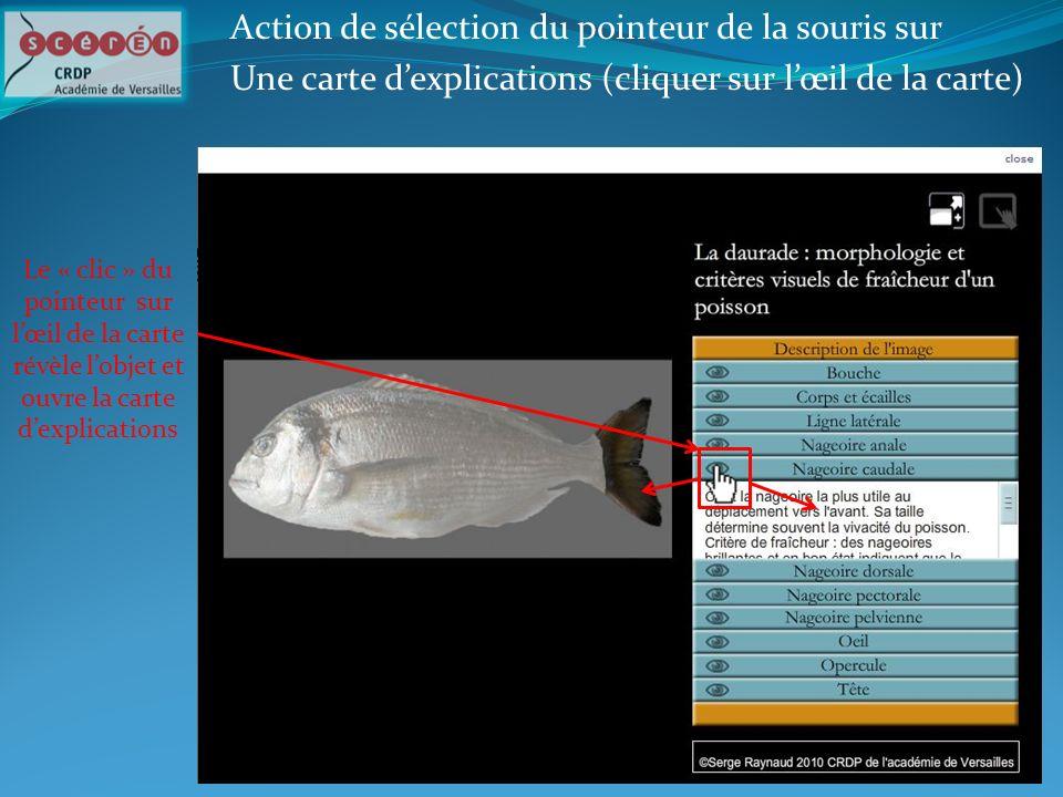 Action de sélection du pointeur de la souris sur Une carte dexplications (cliquer sur lœil de la carte) Le « clic » du pointeur sur lœil de la carte r