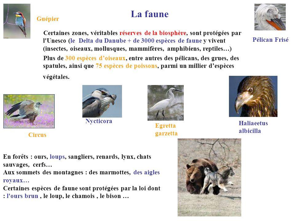 La faune Certaines zones, véritables réserves de la biosphère, sont protégées par l'Unesco (le Delta du Danube + de 3000 espèces de faune y vivent (in