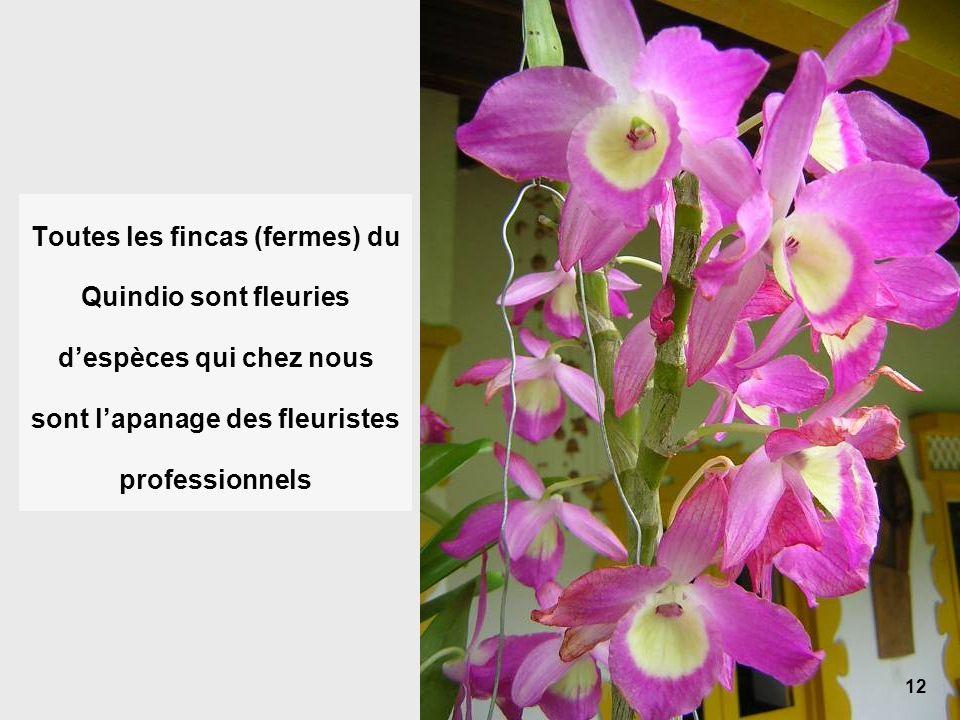 12 Toutes les fincas (fermes) du Quindio sont fleuries despèces qui chez nous sont lapanage des fleuristes professionnels