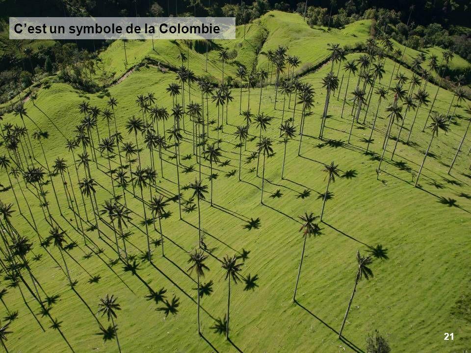 21 Cest un symbole de la Colombie