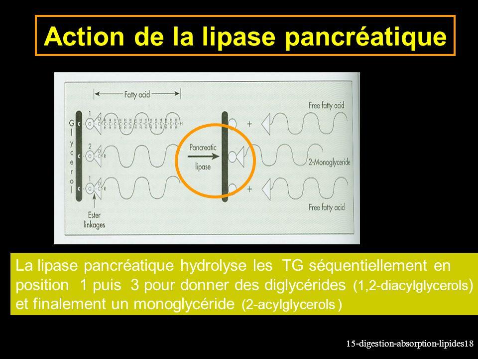 15-digestion-absorption-lipides18 Action de la lipase pancréatique La lipase pancréatique hydrolyse les TG séquentiellement en position 1 puis 3 pour donner des diglycérides (1,2-diacylglycerols ) et finalement un monoglycéride (2-acylglycerols )