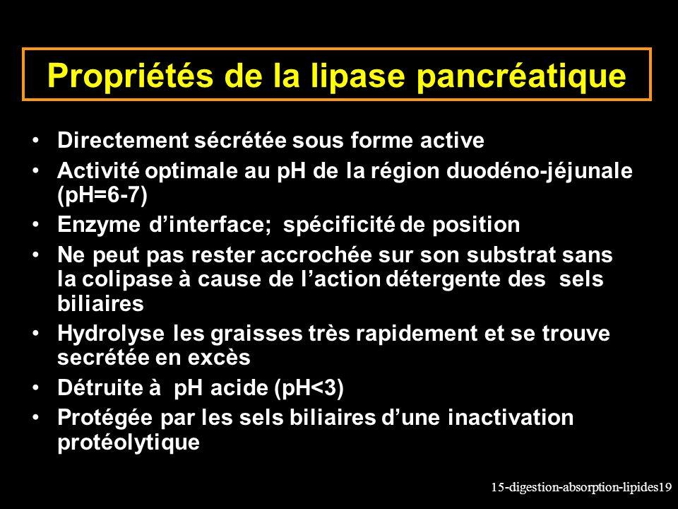 15-digestion-absorption-lipides19 Propriétés de la lipase pancréatique Directement sécrétée sous forme active Activité optimale au pH de la région duo