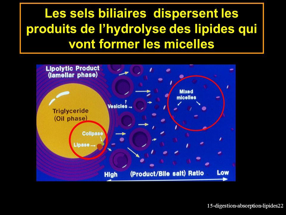 15-digestion-absorption-lipides22 Les sels biliaires dispersent les produits de lhydrolyse des lipides qui vont former les micelles