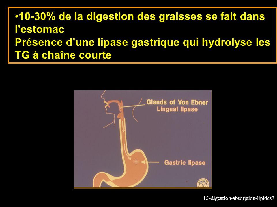 15-digestion-absorption-lipides7 10-30% de la digestion des graisses se fait dans lestomac Présence dune lipase gastrique qui hydrolyse les TG à chaîn