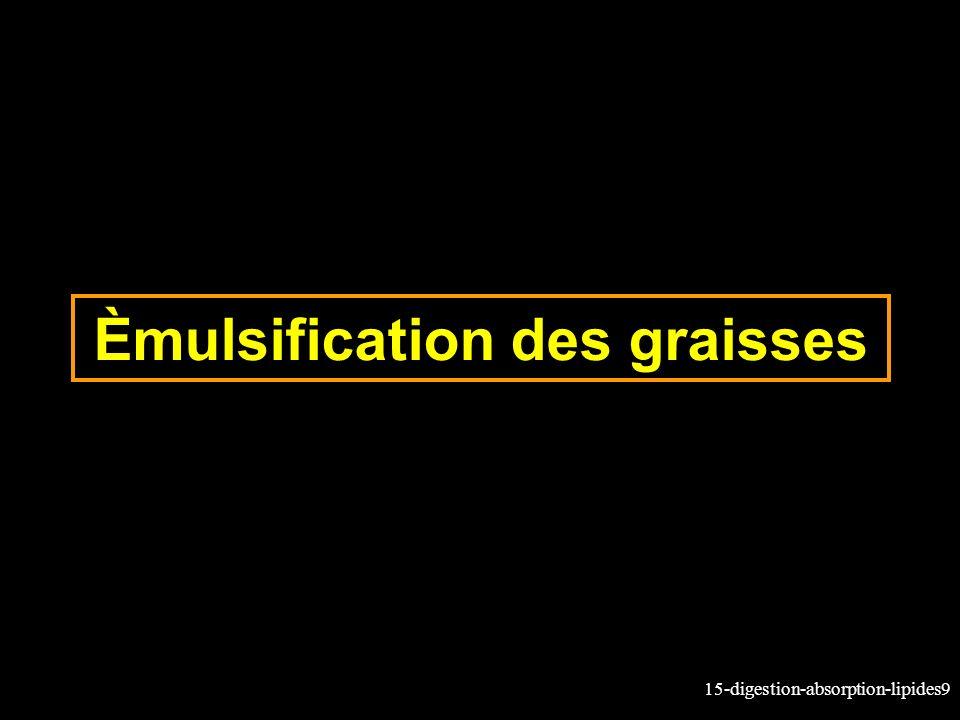 15-digestion-absorption-lipides9 Èmulsification des graisses