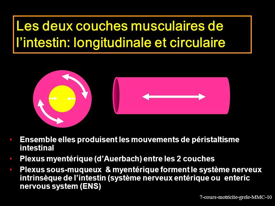 7-cours-motricite-grele-MMC-10 Les deux couches musculaires de lintestin: longitudinale et circulaire Ensemble elles produisent les mouvements de péri