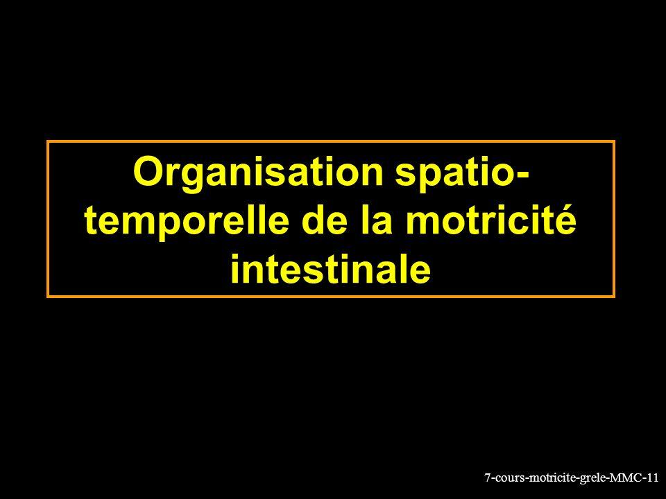 7-cours-motricite-grele-MMC-11 Organisation spatio- temporelle de la motricité intestinale