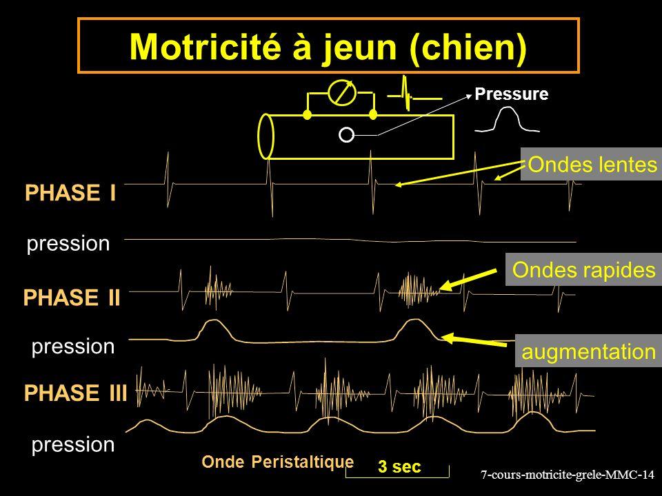 7-cours-motricite-grele-MMC-14 PHASE I PHASE II PHASE III Pressure Onde Peristaltique 3 sec Motricité à jeun (chien) Ondes lentes pression Ondes rapides augmentation