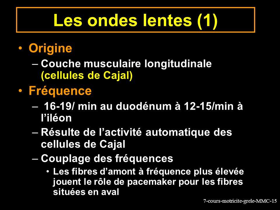 7-cours-motricite-grele-MMC-15 Les ondes lentes (1) Origine –Couche musculaire longitudinale (cellules de Cajal) Fréquence – 16-19/ min au duodénum à