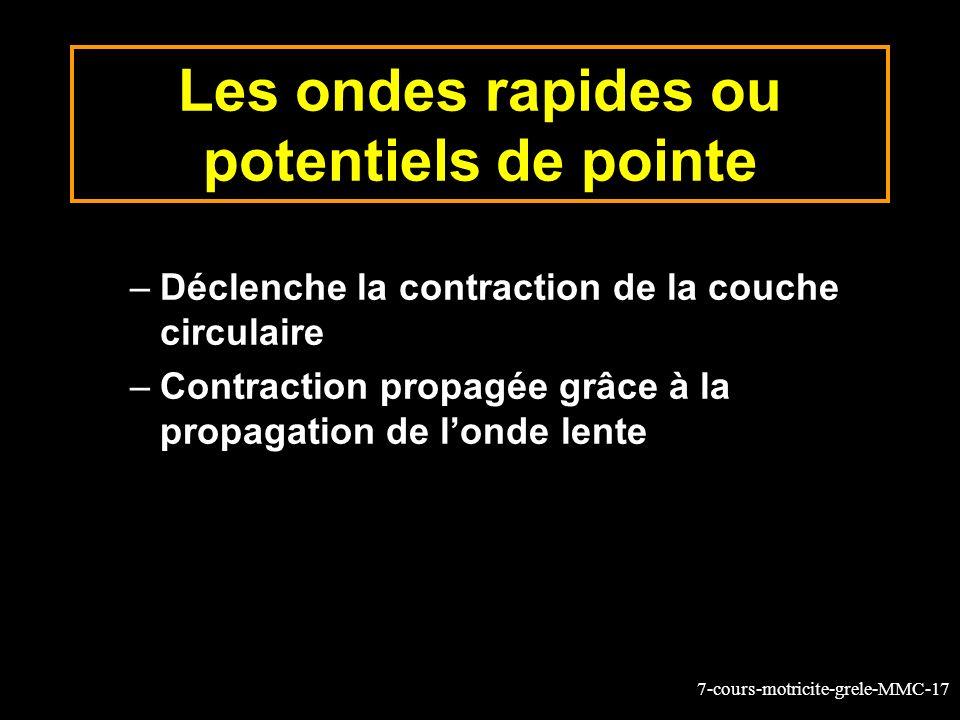 7-cours-motricite-grele-MMC-17 Les ondes rapides ou potentiels de pointe –Déclenche la contraction de la couche circulaire –Contraction propagée grâce à la propagation de londe lente
