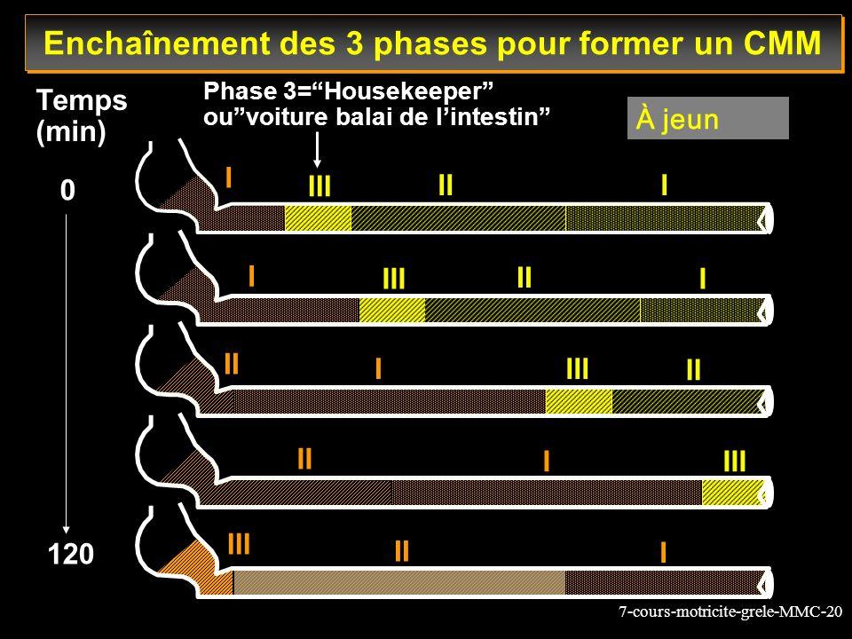 7-cours-motricite-grele-MMC-20 III III III II I III II III II I I III Phase 3=Housekeeper ouvoiture balai de lintestin Temps (min) 0 120 I II I I Ench