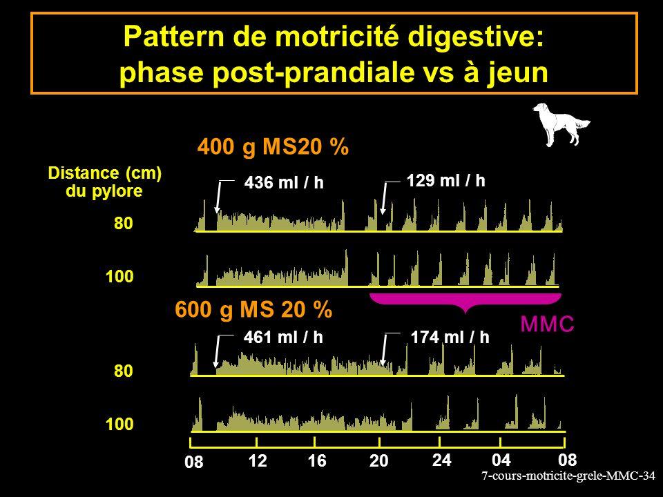 7-cours-motricite-grele-MMC-34 Distance (cm) du pylore 80 100 129 ml / h 174 ml / h 436 ml / h 461 ml / h 600 g MS 20 % 400 g MS20 % 80 100 08 121620 240408 Pattern de motricité digestive: phase post-prandiale vs à jeun MMC