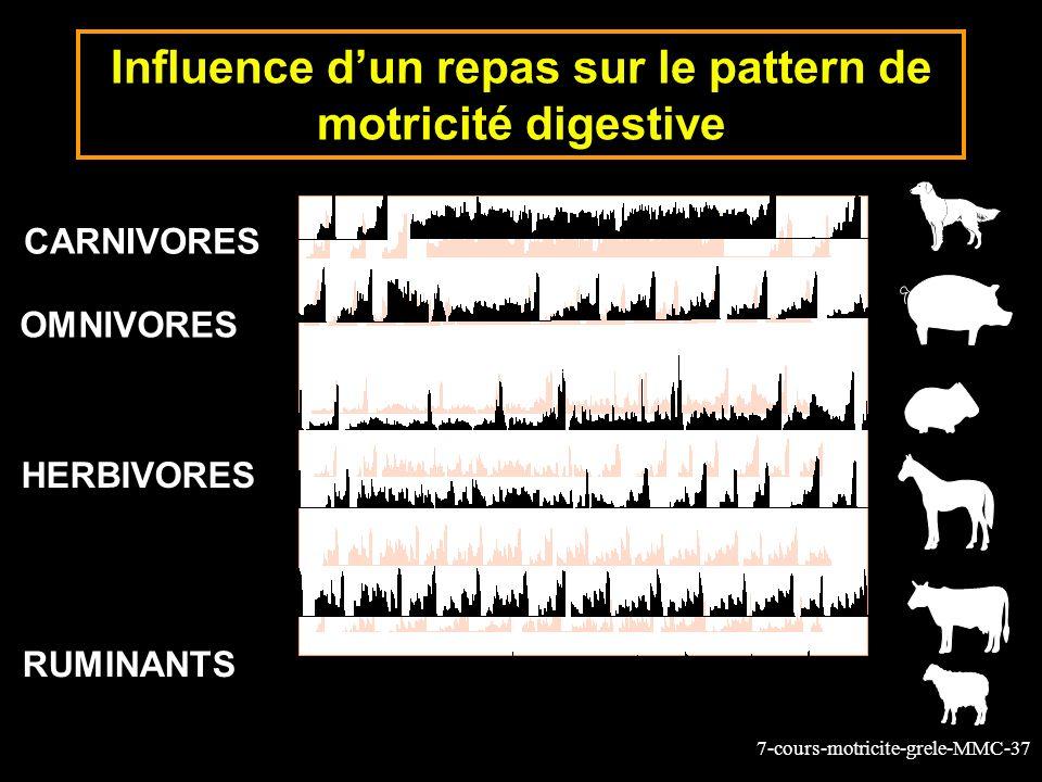 7-cours-motricite-grele-MMC-37 OMNIVORES HERBIVORES RUMINANTS CARNIVORES Influence dun repas sur le pattern de motricité digestive