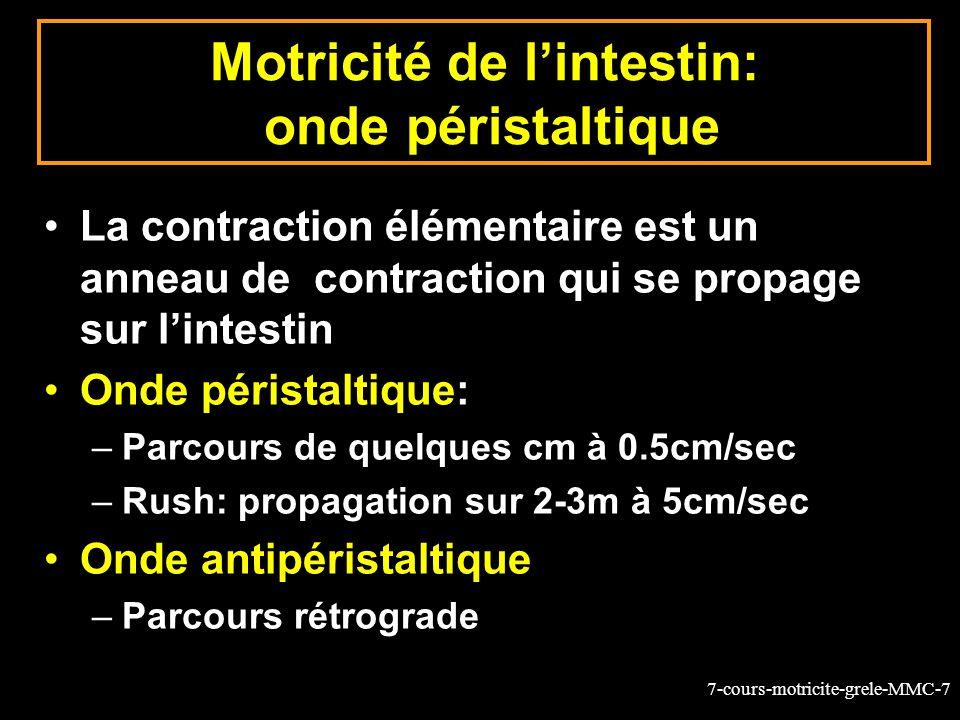 7-cours-motricite-grele-MMC-7 Motricité de lintestin: onde péristaltique La contraction élémentaire est un anneau de contraction qui se propage sur lintestin Onde péristaltique: –Parcours de quelques cm à 0.5cm/sec –Rush: propagation sur 2-3m à 5cm/sec Onde antipéristaltique –Parcours rétrograde