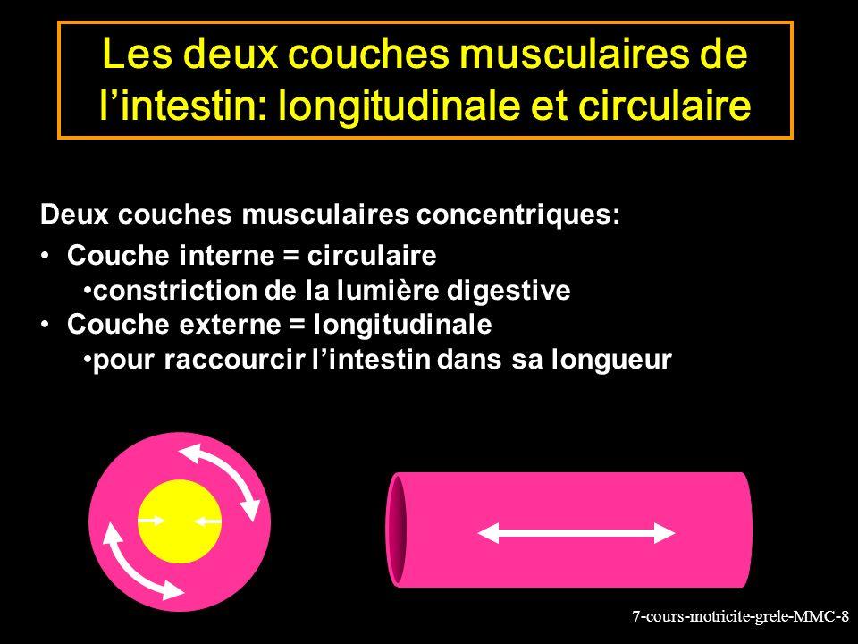 7-cours-motricite-grele-MMC-8 Les deux couches musculaires de lintestin: longitudinale et circulaire Deux couches musculaires concentriques: Couche interne = circulaire constriction de la lumière digestive Couche externe = longitudinale pour raccourcir lintestin dans sa longueur
