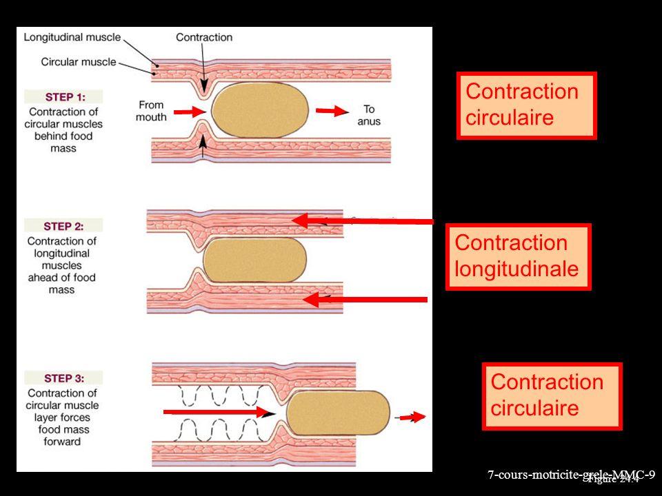 7-cours-motricite-grele-MMC-10 Les deux couches musculaires de lintestin: longitudinale et circulaire Ensemble elles produisent les mouvements de péristaltisme intestinal Plexus myentérique (dAuerbach) entre les 2 couches Plexus sous-muqueux & myentérique forment le système nerveux intrinsèque de lintestin (système nerveux entérique ou enteric nervous system (ENS)