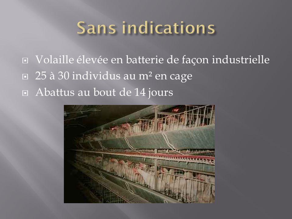 Volaille élevée en batterie de façon industrielle 25 à 30 individus au m² en cage Abattus au bout de 14 jours