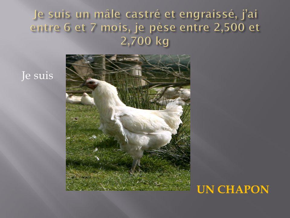 Durée de vie de 81 jours Nourrit avec des aliments industriels contenant au moins 70% de céréales DLV : 7 jours après labattage 25 poulets pour 10m² de parcours herbeux