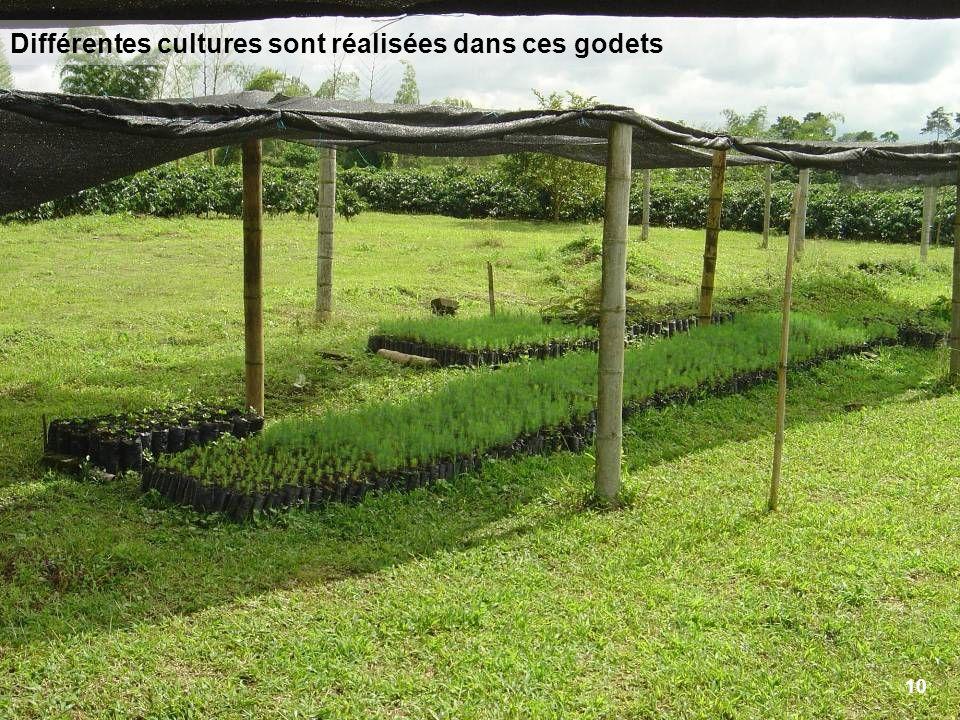 10 Différentes cultures sont réalisées dans ces godets