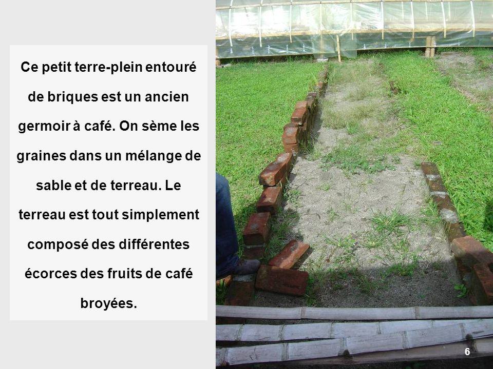 6 Ce petit terre-plein entouré de briques est un ancien germoir à café. On sème les graines dans un mélange de sable et de terreau. Le terreau est tou
