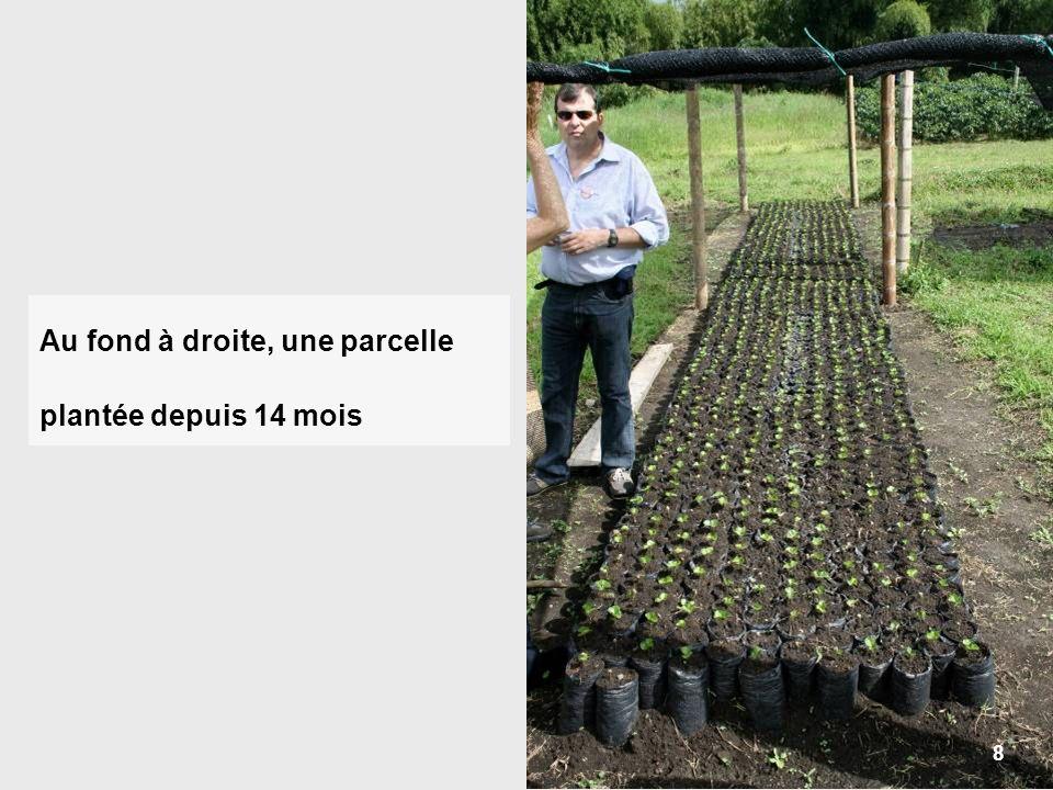 9 Dès la germination, on repique les plantules dans des cylindres de terreau rangés à labri du soleil.