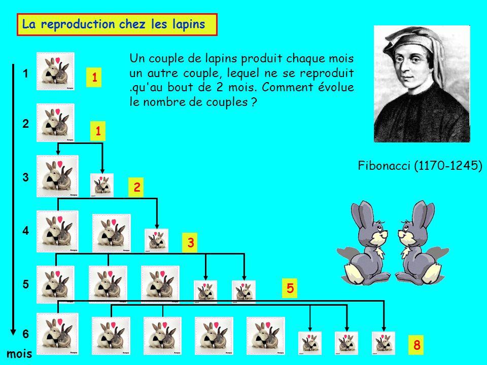 1 6 5 4 3 2 mois Fibonacci (1170-1245) Un couple de lapins produit chaque mois un autre couple, lequel ne se reproduit.qu'au bout de 2 mois. Comment é