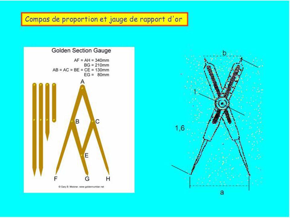 Le compas de proportion et les phalanges