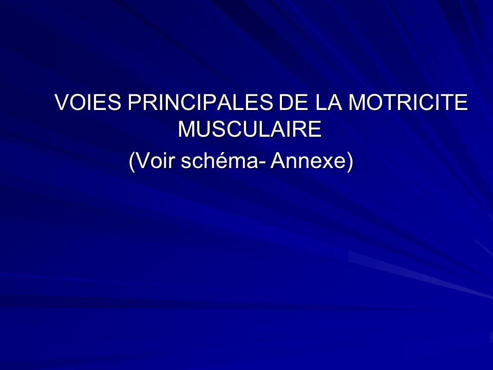VOIES PRINCIPALES DE LA MOTRICITE MUSCULAIRE (Voir schéma- Annexe)