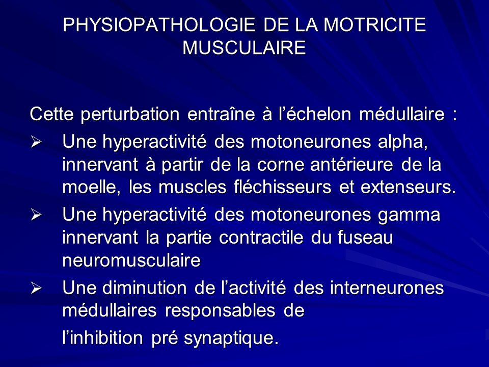 PHYSIOPATHOLOGIE DE LA MOTRICITE MUSCULAIRE Cette perturbation entraîne à léchelon médullaire : Une hyperactivité des motoneurones alpha, innervant à