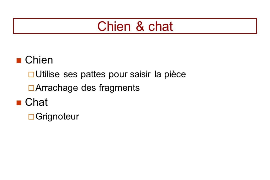 Chien & chat Chien Utilise ses pattes pour saisir la pièce Arrachage des fragments Chat Grignoteur