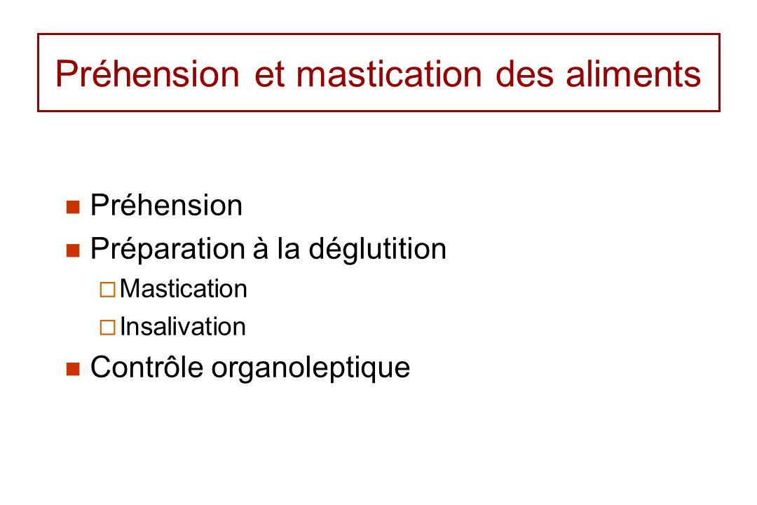 Préhension et mastication des aliments Préhension Préparation à la déglutition Mastication Insalivation Contrôle organoleptique