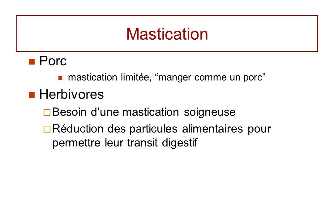 Mastication Porc mastication limitée, manger comme un porc Herbivores Besoin dune mastication soigneuse Réduction des particules alimentaires pour per