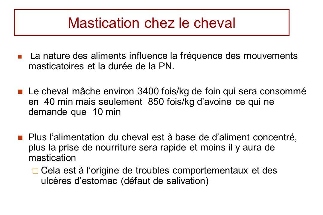 Mastication chez le cheval L a nature des aliments influence la fréquence des mouvements masticatoires et la durée de la PN. Le cheval mâche environ 3