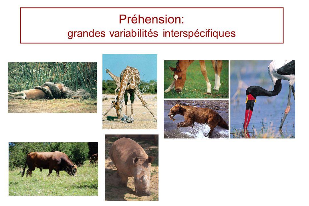 Préhension: grandes variabilités interspécifiques