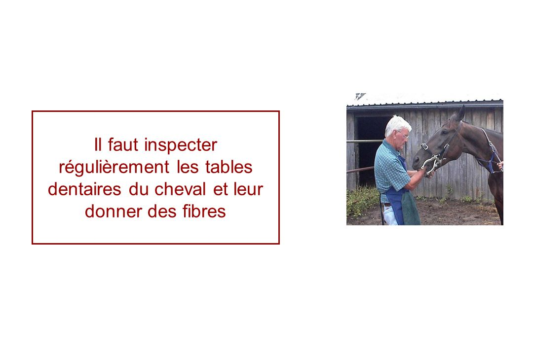Il faut inspecter régulièrement les tables dentaires du cheval et leur donner des fibres