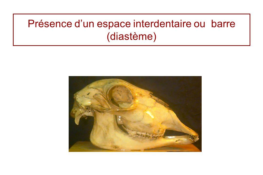 Présence dun espace interdentaire ou barre (diastème)