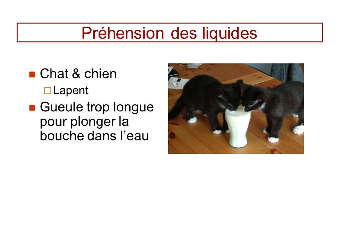 Préhension des liquides Chat & chien Lapent Gueule trop longue pour plonger la bouche dans leau