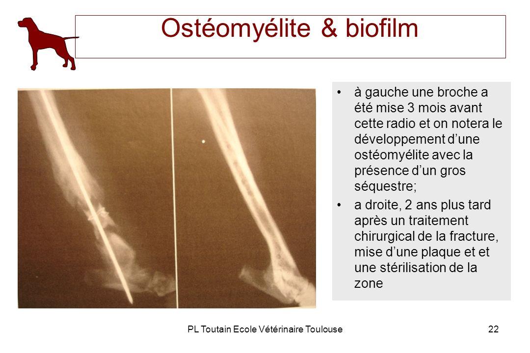PL Toutain Ecole Vétérinaire Toulouse22 Ostéomyélite & biofilm à gauche une broche a été mise 3 mois avant cette radio et on notera le développement d