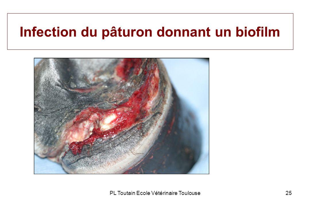 PL Toutain Ecole Vétérinaire Toulouse25 Infection du pâturon donnant un biofilm