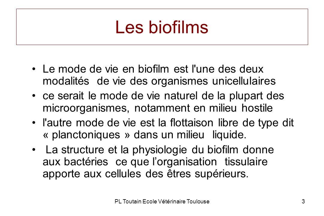 PL Toutain Ecole Vétérinaire Toulouse4 Les biofilms Ils peuvent se développer sur n importe quel type de surface naturelle (débris cellulaires, séquestres) ou artificielle (prothèse, sonde, cathéter…) mais aussi sur des tissus vivants (endocardites) La matrice du biofilm, est constituée de polysaccharides (peptidoglycanes, cellulose) imbibée d eau.