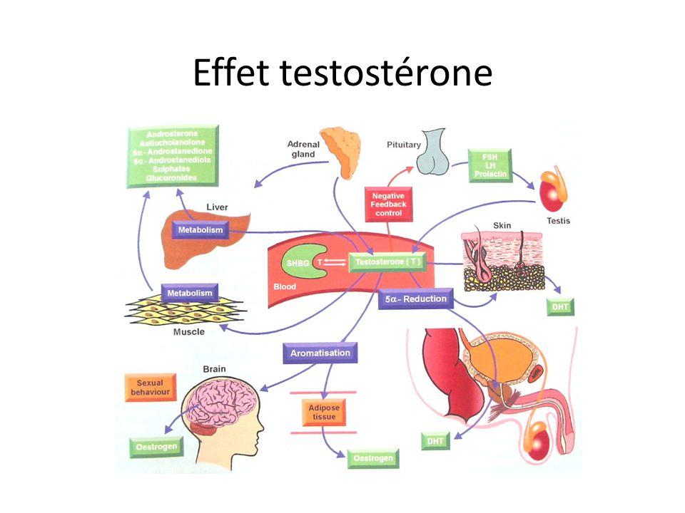 Effet testostérone